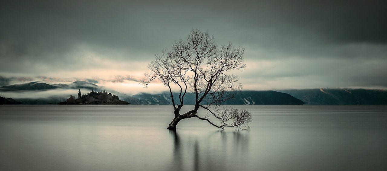 The Wanaka Tree Steven Smith