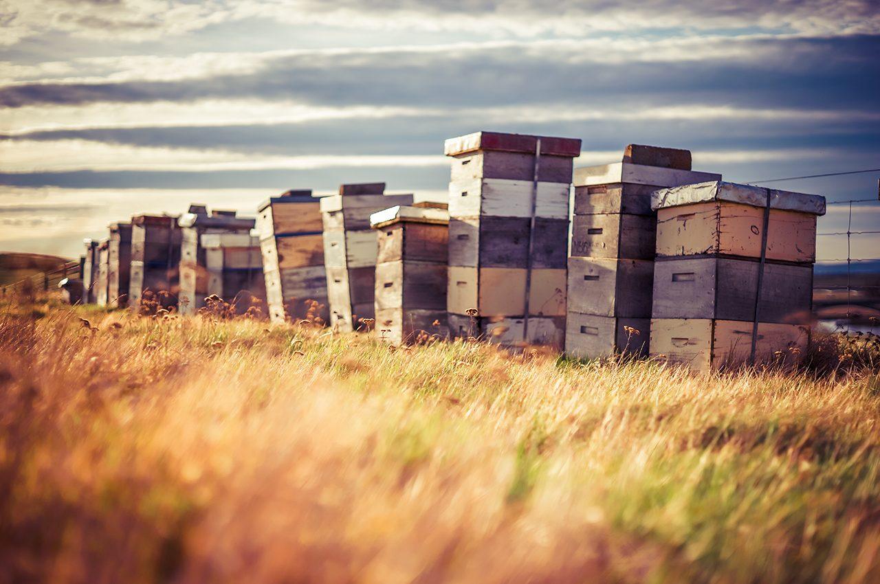 Bee Hives At Waipiata