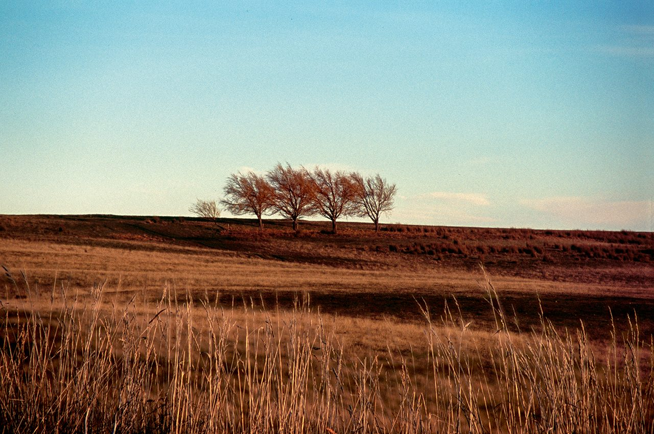 Four Trees At Wedderburn